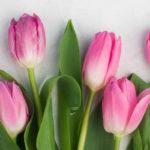 145 Spring